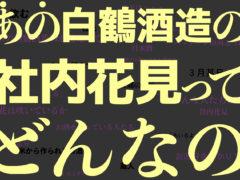 【動画】白鶴酒造の社内お花見レポート!